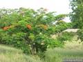 021-SurlaroutedeMombasa