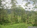 073-Plantationsdethe