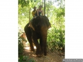 060-Baladeenelephant-KohChang