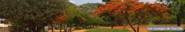 Flamboyant sur le chemin de Nairobi