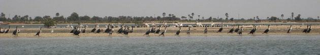 Réserve ornithologique de Mar Lodj