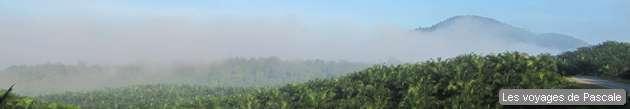 Palmes sous la brume